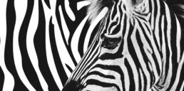 SEHHAUS Zebra uai
